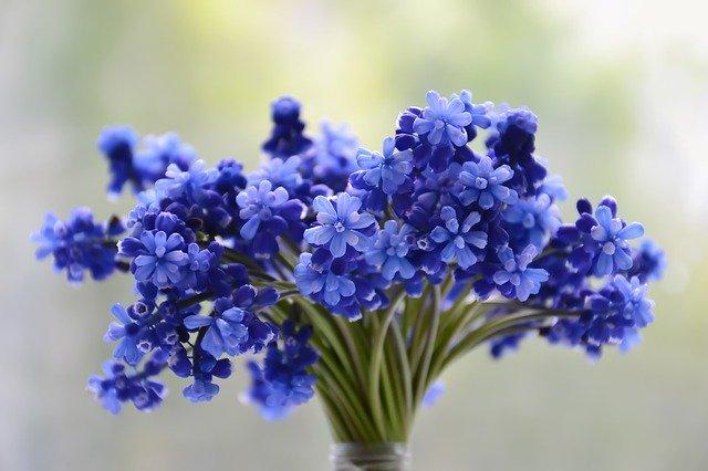 modrá kytice